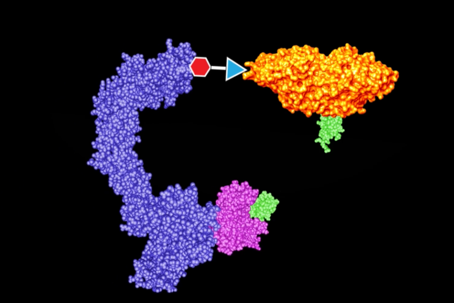 An illustration showing how protein degraders work