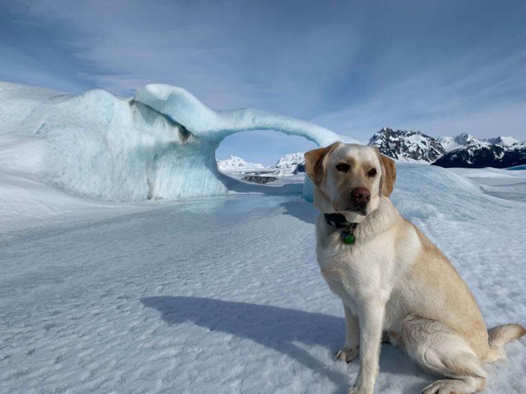 Heidi Voss' dog in the snow